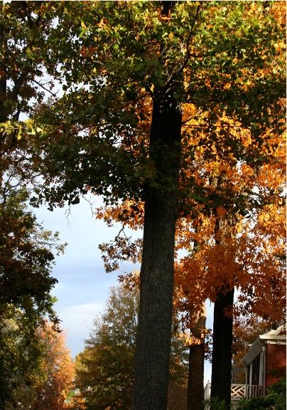 Fall2sized
