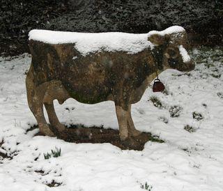 Snowcow
