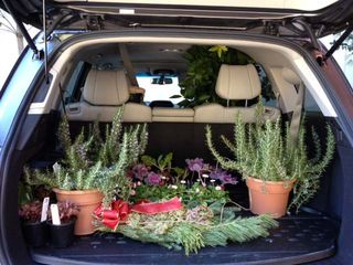 Carload of plants_edited-1