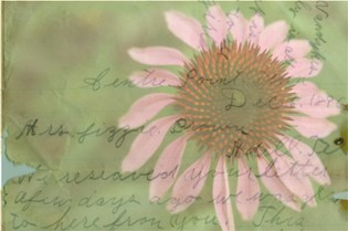 Letters_from_the_garden