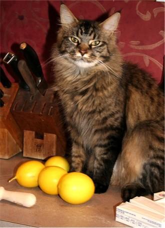 Lemonhairy