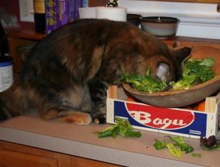 Salad_cat